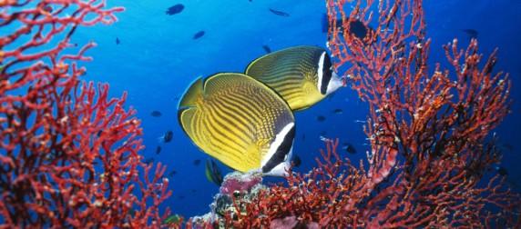 fondo-marino-tropical-fondos